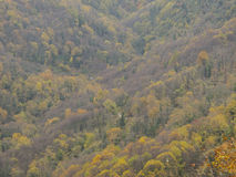 Autumn scene in forest Royalty Free Stock Image