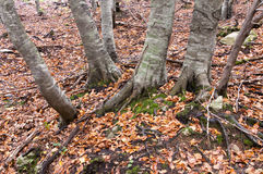 Autumn scene in forest Stock Images