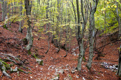 Autumn scene in forest Royalty Free Stock Photo