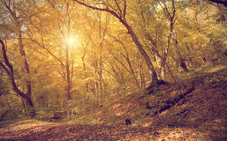 Autumn scene in the forest Royalty Free Stock Photography