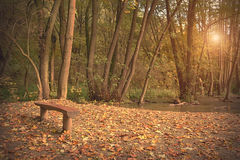Autumn scene in the forest Stock Image