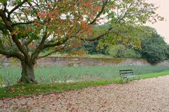 Autumn scene. A autumn scene with garden bench and path Stock Image