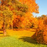 Autumn scene with Golden leaves, Autumnal trees, meadow, blue sky  and sun shining beams. Beautiful Countryside landscape.  stock photos