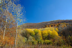 Autumn scene in high mountains Stock Images