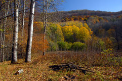Autumn scene in high mountains Royalty Free Stock Image