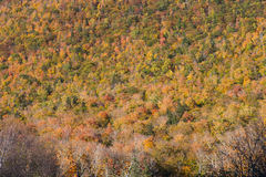 Autumn scene on hill in northern Vermont Royalty Free Stock Images