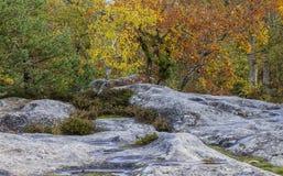 Autumn Scene i den Fontainebleau skogen Arkivfoto