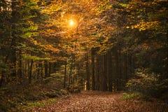 Autumn Scene In Tuhinj Valley, Slovenia Stock Photography