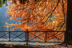Autumn scene at the Lake in Parco di Monza Stock Image