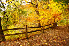 Autumn scene Stock Photos