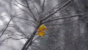 Autumn scene with lonely yellow leaf on the tree under snow. Slow motion shot of light snow falling outside. Bare tree with the only yellow leaf left and water stock footage
