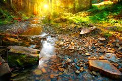 Autumn. Mountain spring, forest landscape stock photography