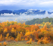 Autumn scene with mountains on background Royalty Free Stock Image