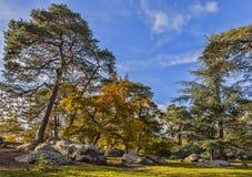 Autumn Scene na floresta de Fontainebleau imagens de stock royalty free