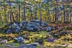 Autumn Scene na floresta de Fontainebleau fotografia de stock