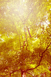 Autumn scene in the natural park. Autumn background Royalty Free Stock Photography