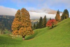 Autumn scene near Gstaad Royalty Free Stock Photos