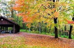 Autumn Scene In A Park Stock Image