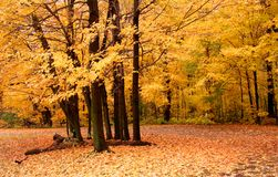 Autumn Scene In A Park Stock Photography