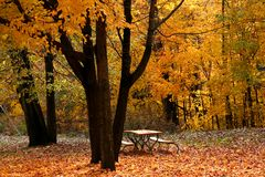 Autumn Scene In A Park Royalty Free Stock Images