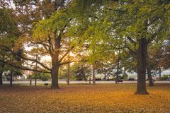 Autumn scene from park in Belgrade fortress Royalty Free Stock Photo