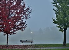 Autumn scene. Park bench between two autumn trees on a foggy background Royalty Free Stock Photography