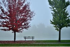 Autumn scene. Park bench between two autumn trees on a foggy background Stock Photography