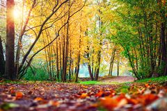 Autumn scene in park. Landscape of colorful autumn. Fall nature on sunset Royalty Free Stock Image