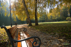 Autumn scene in park Royalty Free Stock Photos