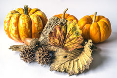 Autumn scene. A pumpkin is a cultivar of the squash plant, most commonly of Cucurbita pepo royalty free stock photography