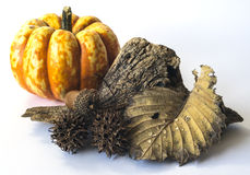 Autumn scene. A pumpkin is a cultivar of the squash plant, most commonly of Cucurbita pepo royalty free stock image