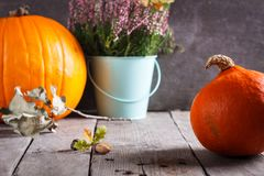 Autumn scene with pumpkin, heather, oak acorn. royalty free stock images