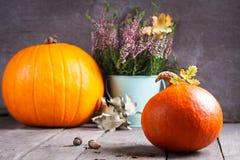 Autumn scene with pumpkin, heather, oak acorn. Stock Photo