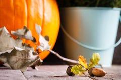 Autumn scene with pumpkin, heather, oak acorn. Stock Photos