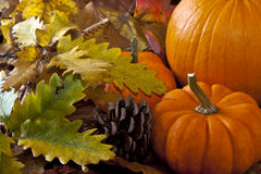 Autumn scene with pumpkins Royalty Free Stock Images