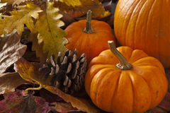 Autumn scene with pumpkins Royalty Free Stock Photos