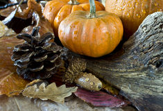 Autumn scene with pumpkins Royalty Free Stock Image