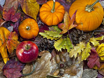 Autumn scene with pumpkins Stock Image