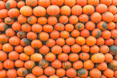 Autumn scene with pumpkins in garden Royalty Free Stock Photo