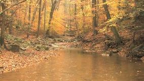 Autumn scene rain stock video