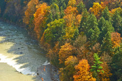 Autumn scene of river and forest Royalty Free Stock Photo