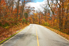 Autumn scene with road Royalty Free Stock Image