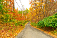 Autumn scene with road Royalty Free Stock Images
