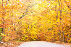 Autumn scene with road Royalty Free Stock Photography