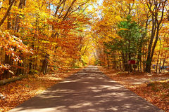 Autumn scene with road Royalty Free Stock Photo