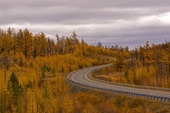 Autumn scene with road in forest Royalty Free Stock Photography