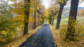 Autumn scene with road in forest with colorful foliage Royalty Free Stock Photos