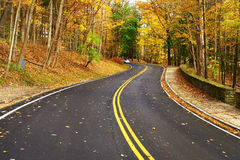 Autumn scene with road in forest Royalty Free Stock Image
