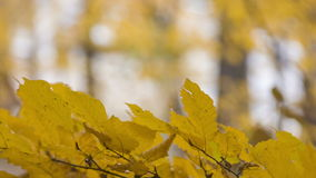 Autumn scene with road in forest. View from the forest stock footage