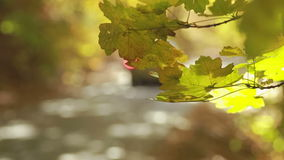 Autumn scene with road in forest. View from the forest stock video footage